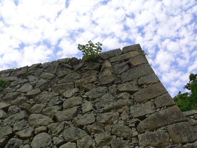 なかなかの石垣でございます。