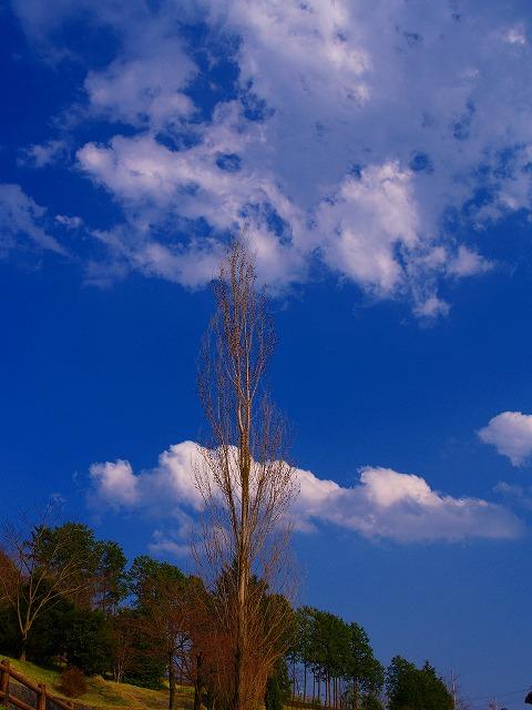 戸川公園の木