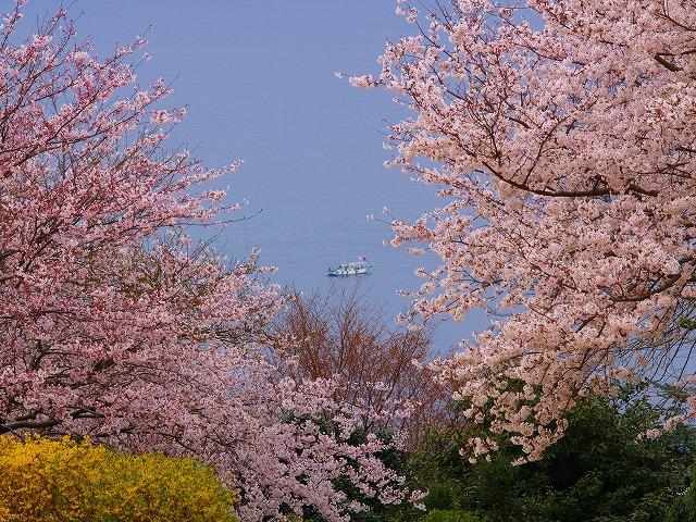 桜と海ー2