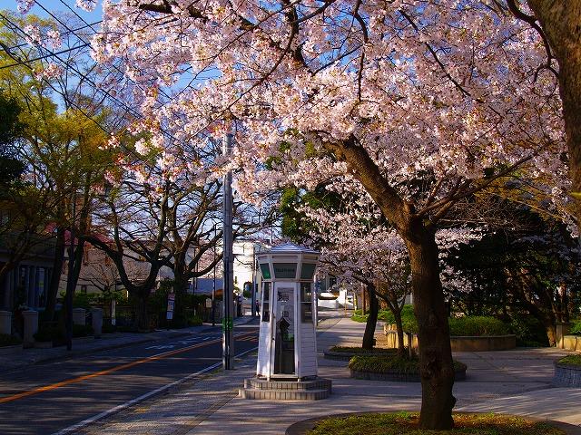 桜咲く朝のホワイト・ボックス
