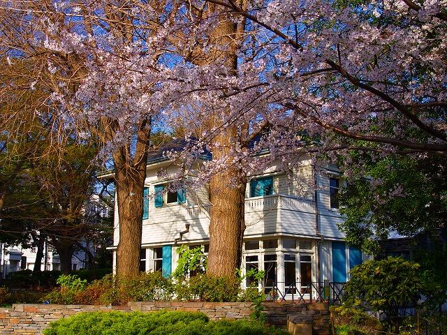 桜咲くエリスマン邸
