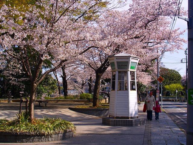 満開の桜とホワイト・ボックス