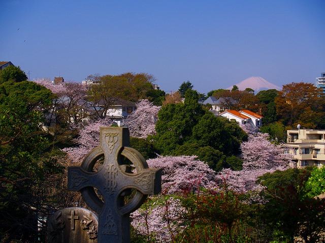 外人墓地から見た富士山