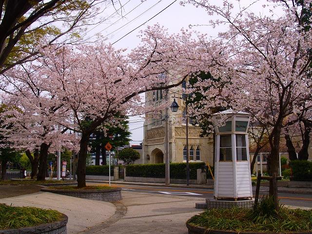桜とホワイト・ボックスー3