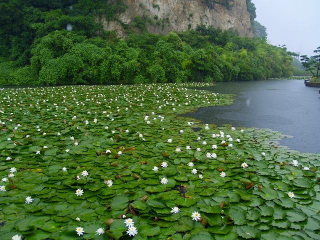 本牧市民公園の池