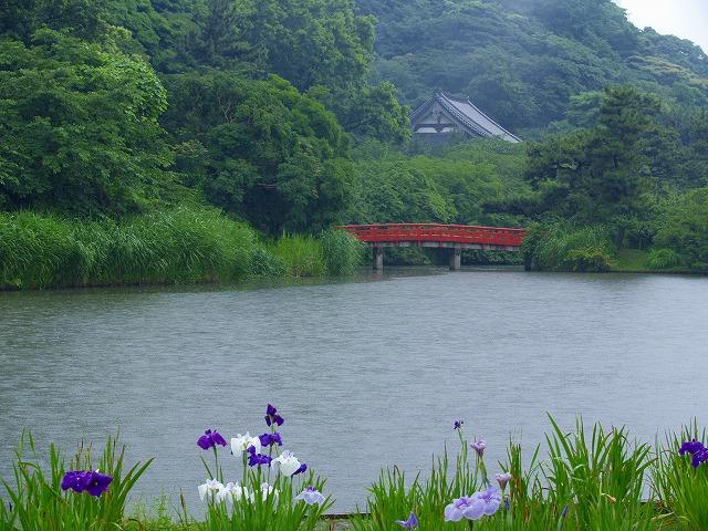 花ショウブの池