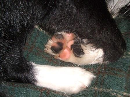 Mars paw