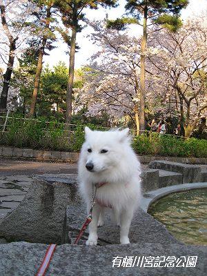 桜の園はワンコNG