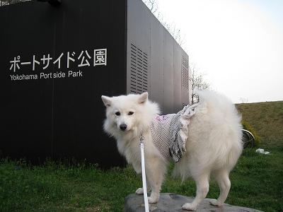 横浜駅に一番近い公園
