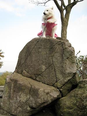 傾斜の石は自分で登ったよ