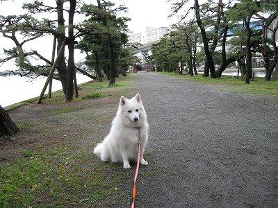 久し振りの長散歩