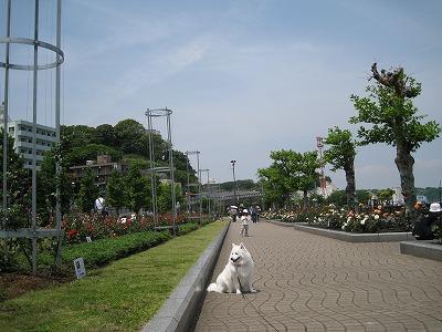 海と薔薇の公園です。