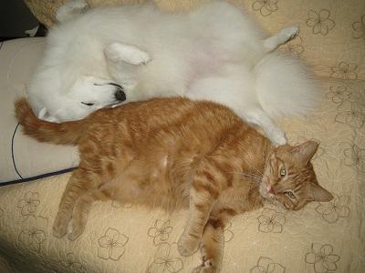 雛子とお昼寝