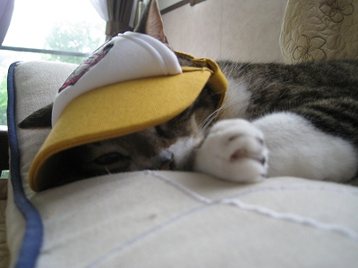 もう寝てやる!!!