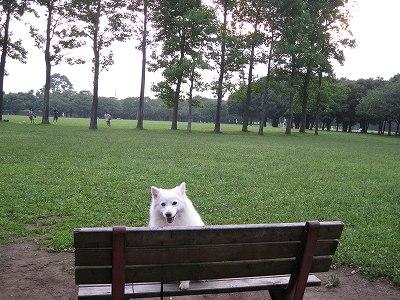 ベンチ休憩