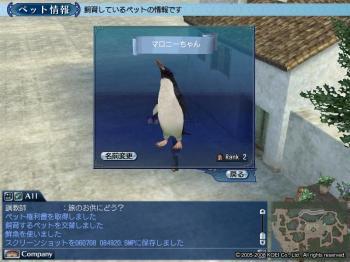 マカロニペンギン2