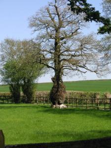 ぷーさんの木