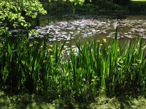 モネの池風