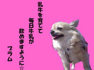 080707_01.jpg