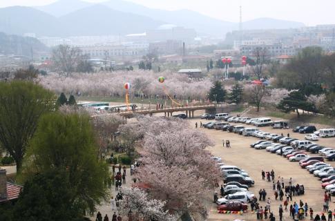 旅順桜花園(龍王塘水庫公園)