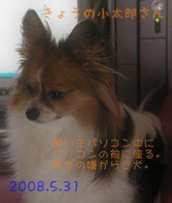2008531