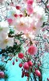 桜No.2