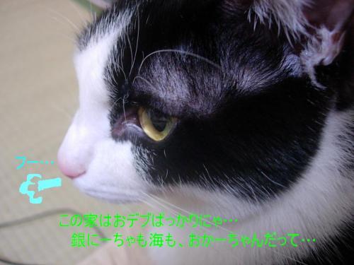 20070420134016.jpg
