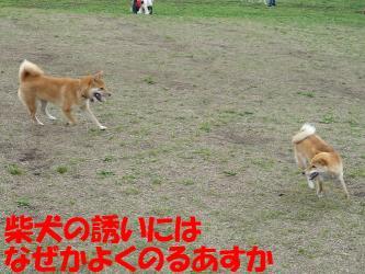 bP1000101.jpg