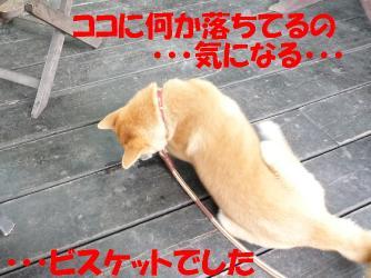 bP1000106.jpg