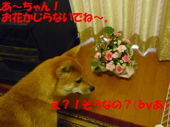 bP1000223.jpg