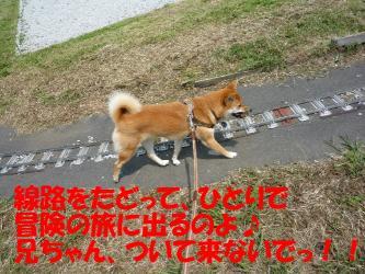bP1000254.jpg