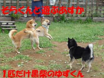 bP1000670.jpg