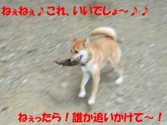 bP1010604.jpg