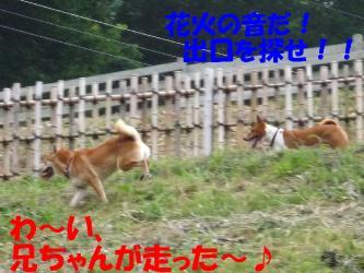 bP1010615.jpg