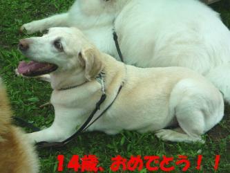 bP1010641.jpg