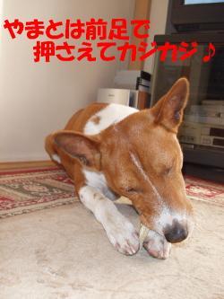 bP3160011.jpg