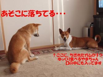 bP3160019.jpg