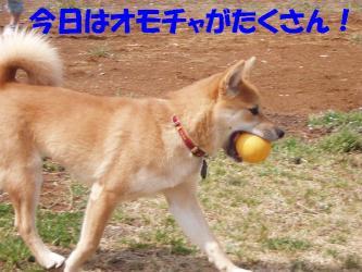 bP3230033.jpg