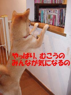 bP4130031.jpg