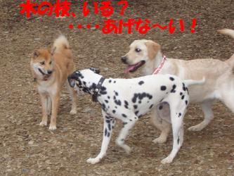 bP4190033.jpg