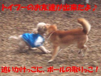 bP4190039.jpg