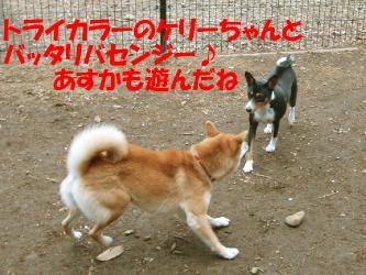 bP4200005.jpg