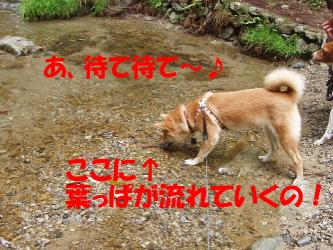 bP4270019.jpg