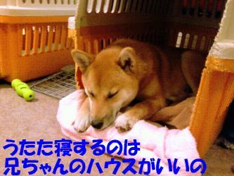 k2008051002-1.jpg