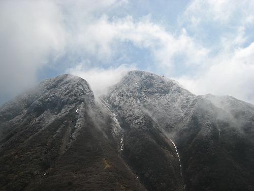 指山 マンサク 023