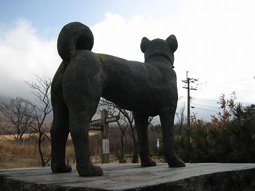指山 マンサク 049