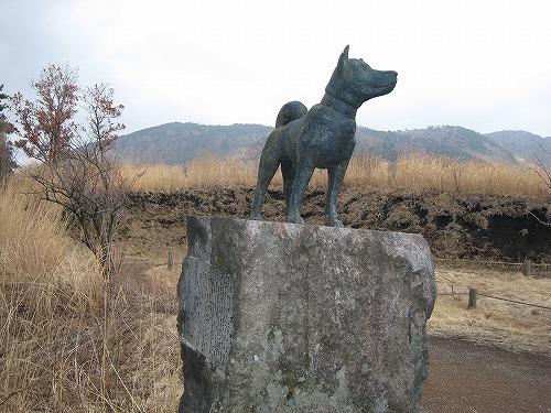 指山 マンサク 051