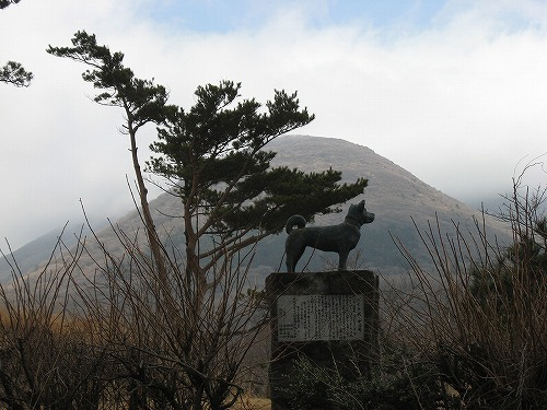 指山 マンサク 052