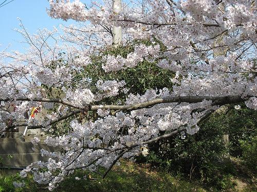 花見登山(宮地嶽) 068