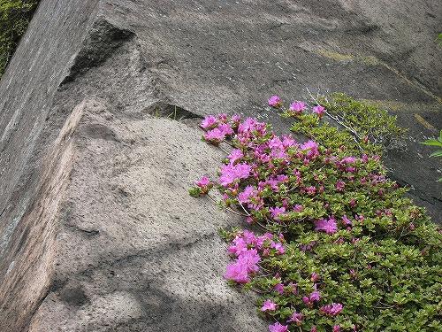 42 岩のミヤマ